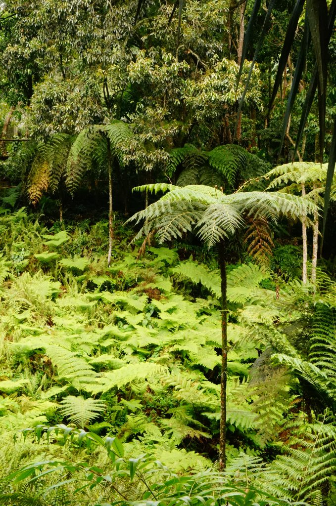 Tropical forest vertical. Bosque tropical vertical